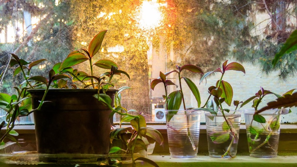 How to Propagate: Pothos, Succulents, and Arrowhead