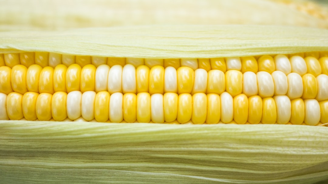 Late Summer Recipes ft. Corn!