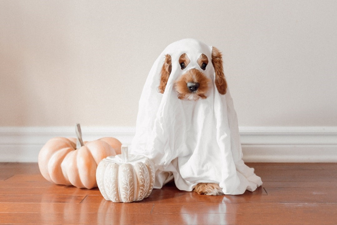 Culturally and Environmentally Appropriate Halloween Costumes